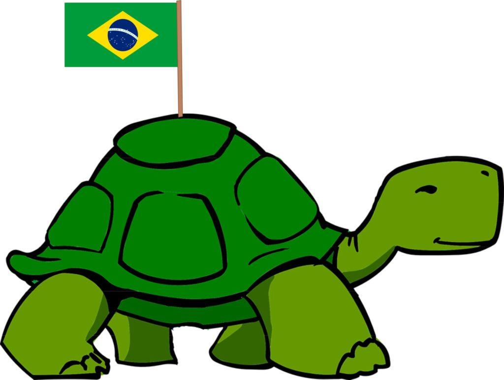 tartaruga com a bandeira do brasil